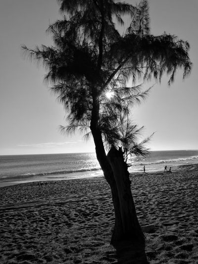 beach sand filaos sun tree