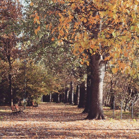 Lungopo Cremona Lombardia Italia 11novembre2015 Natura Nature Piante Foglie Parco Autunno  Autun Tourisminitaly Igerscremona Igerslombardia Igersitalia