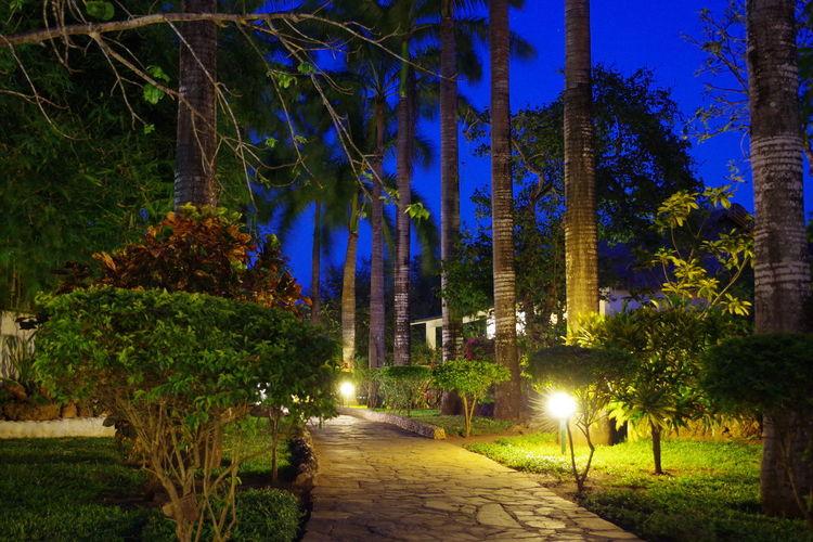 Diani Beach Holiday Hotel Illuminated Kenia Leisure Lodge Lodge Long Exposure Shot Night Night Photography Nightphotography Palm Trees