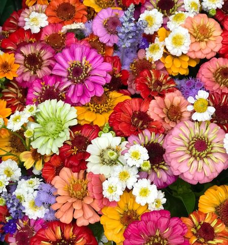 50 Shades Of Pink Market Local Produce Flowers Colourful Flower Freshness Beauty In Nature Fragility Multi Colored Choice