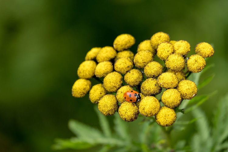 Close-up of insect on yellow flowering plant