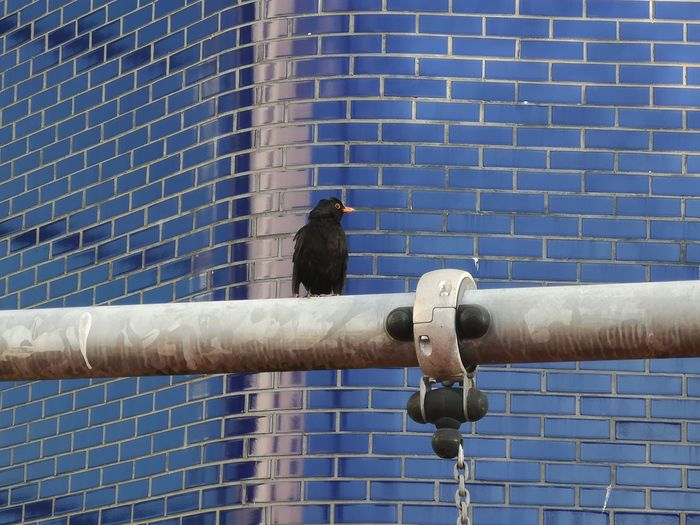 Two birds perching on metal against wall