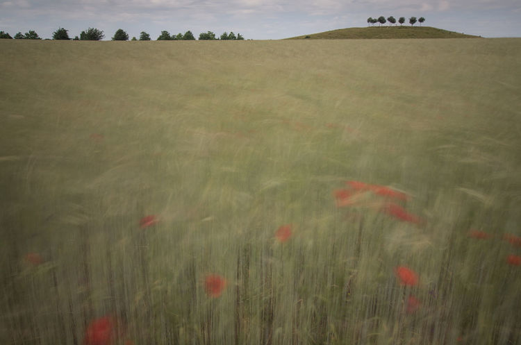 Movements Movement Photography Wind Movement Windy Crop In Motion Crop Field Color Palette The Magic Mission Mountain In The Surging Grain Sea Grainy Images Grainfields Field In Revolt Nature Is Art EyeEm Flower Nature Photography EyeEm Gallery Eyeem Market From My Point Of View Kronsberg Hanover capturing motion Beautifully Organized Naturelovers Nature_collection EyeEm Nature Lover My Favorite Place Long Goodbye The Secret Spaces The Street Photographer - 2017 EyeEm Awards The Great Outdoors - 2017 EyeEm Awards EyeEmNewHere Visual Feast Sommergefühle EyeEm Selects Neon Life Breathing Space Investing In Quality Of Life The Week On EyeEm Your Ticket To Europe Mix Yourself A Good Time Paint The Town Yellow Been There. Discover Berlin Done That. Lost In The Landscape Second Acts Be. Ready. EyeEm Ready   AI Now An Eye For Travel Colour Your Horizn Stories From The City Go Higher This Is Family Visual Creativity Summer Exploratorium