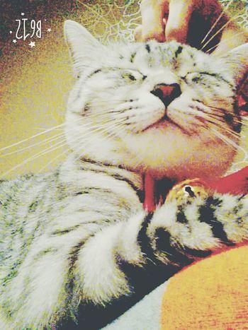 溫暖的?貓溫度 Cats Cat Lovers Cute Pets Cat Relaxing Pet Cute♡ Children Cat♡ Peropero