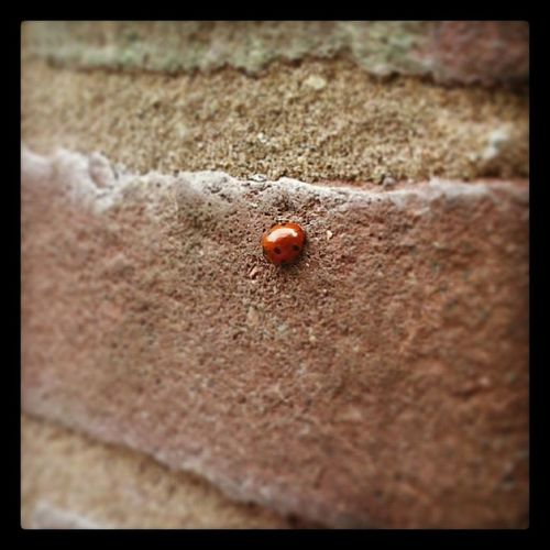 Ladybug Lieveheersbeestje Amsterdam Streetlife nature