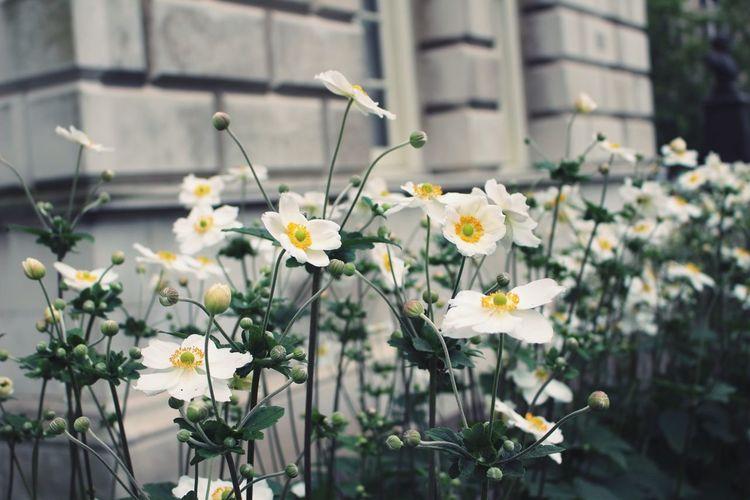 Titanic memorial garden Flowers Belfast Northern Ireland Ireland