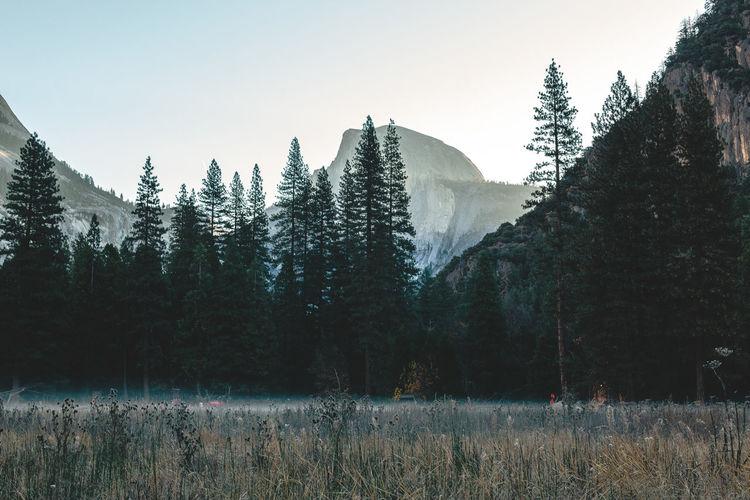 Scenic mountain region comprising the Sierra Nevada Range & Yosemite Valley of the Merced river; famous for giant sequoias, huge rock domes & peaks. Yosemite National Park EyeEm Magazine Fog Foggy Forrest Half Dome Half Dome Rock Yosemite Yosemite National Park Yosemite National Park, California Yosemite Valley