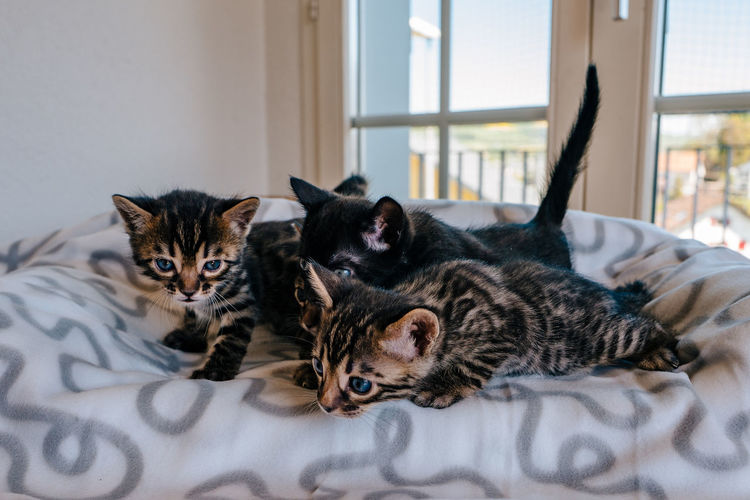 Kittens on sofa at home