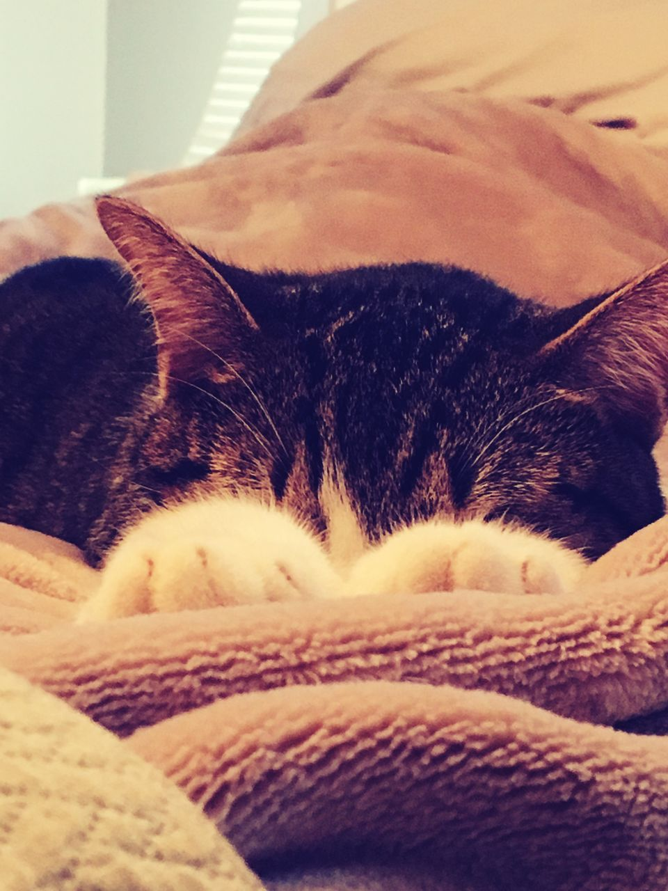 domestic cat, one animal, indoors, pets, domestic animals, animal themes, feline, mammal, cat, sleeping, relaxation, no people, home interior, close-up, day