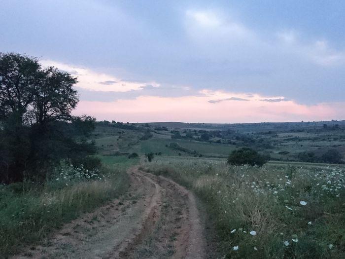 Nature Dirt Road Dawn