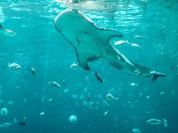 Fishes swimming in sea aquarium