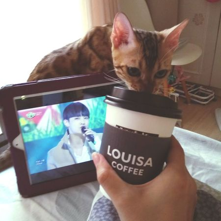三連休首日,卡露比配Louisa配GOT7,心情大好。 Cats 🐱 Cat♡ Coffee Time