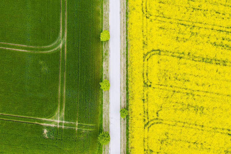 Green Color No People Plant Land Nature Agriculture Field Landscape Grass Aerial View Rural Scene Growth Yellow Day Beauty In Nature Environment Farm Sport Outdoors Scenics - Nature
