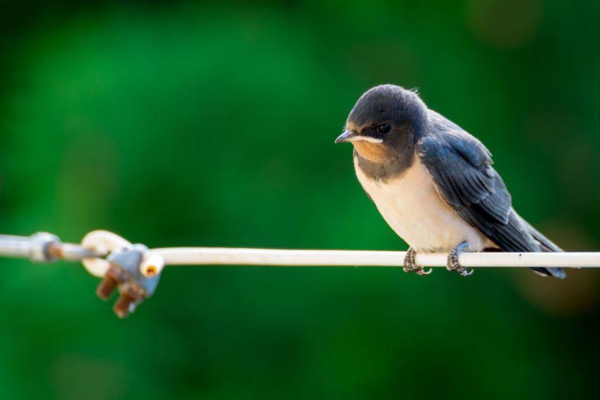 Nikonphotography Nikon Animal Themes Animal Bird Vertebrate Animal Wildlife Animals In The Wild One Animal Nature Beauty In Nature