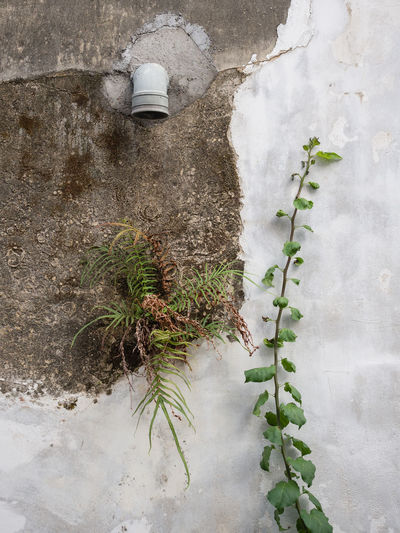 Plant Leaf Plant Part Nature Wall - Building Feature Growth No People Day Built Structure Outdoors Architecture Green Color Building Exterior Wall Beauty In Nature Water Concrete Weathered Pipe Pipe - Tube Still Life Growing Plant Fern Tropical Tropical Climate Creeper Ivy Creeper Plant Plant Life