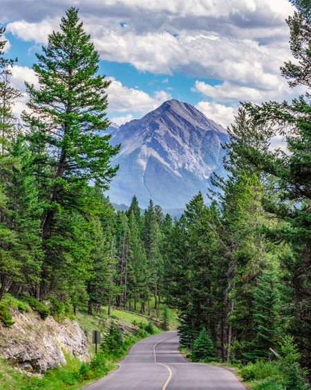 Tree Road Plant Direction Mountain The Way Forward Beauty In Nature Scenics - Nature Sky Cloud - Sky Transportation Nature Tranquility Tranquil Scene Non-urban Scene Day No People Sign Growth Diminishing Perspective Outdoors Long