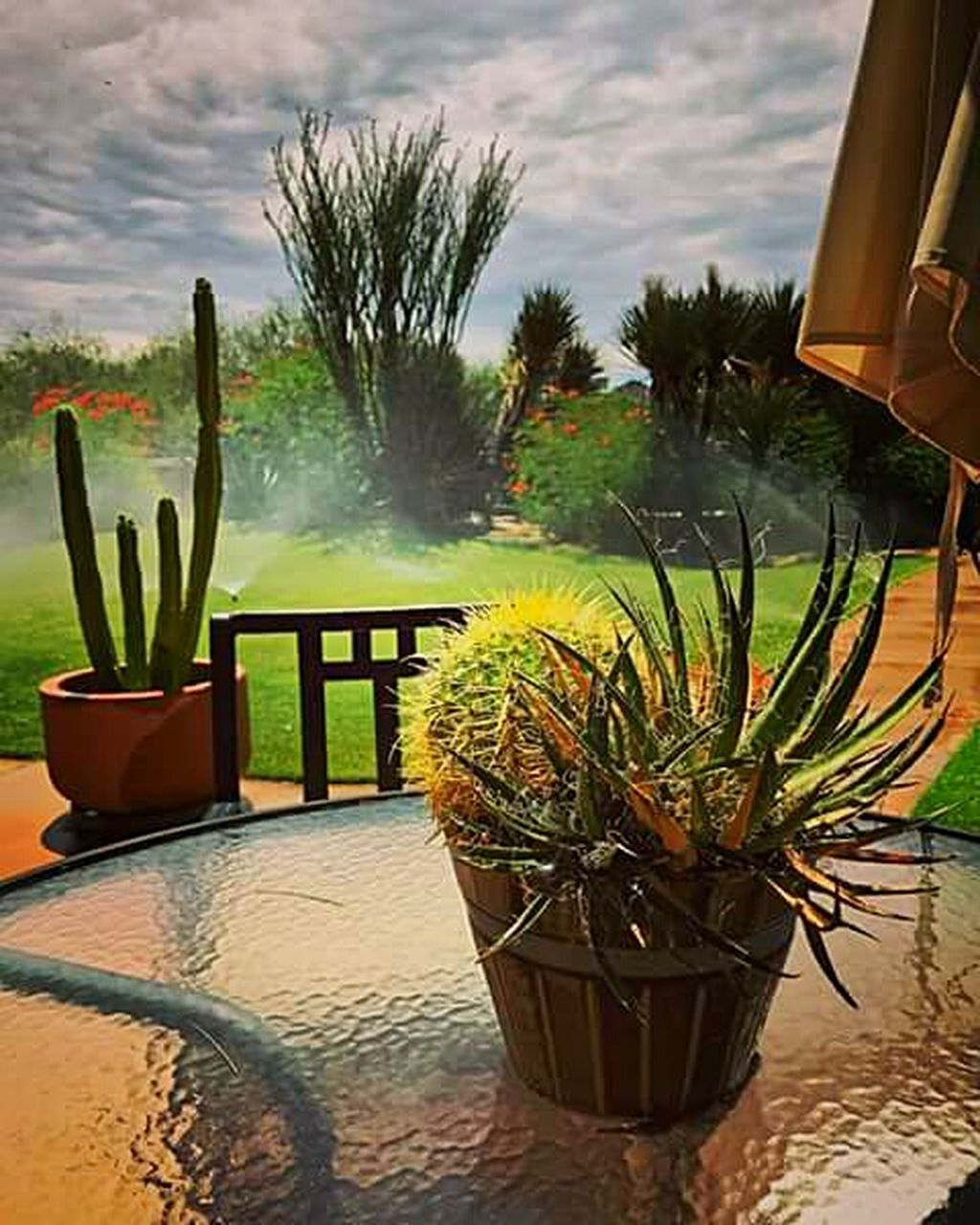 potted plant, day, no people, cactus, nature, plant, outdoors, water, sky