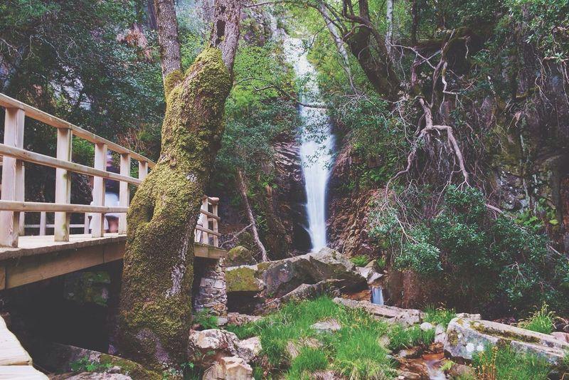 Nature Waterfall Tree Cabñeros National Parck, Spain