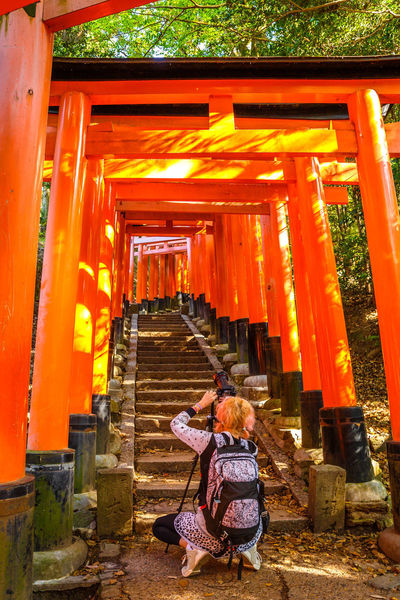 Kyoto, Japan - April 28, 2017: tourist woman walking under red torii gates of famous landmark Fushimi Inari shrine. Travel asia concept. Kyoto's popular landmark. Kyoto, Japan - April 28, 2017: Fushimi Inari Taisha is the most important Shinto shrine famous for its thousands of red torii gates.The lettering engraved on pole are the name of donated organizations Fushimi Fushimi Inari Taisha Fushimi Inari Taisha Shrine Gates Japan Photography Kyoto, Japan Shinto Shrine Shinto Temple TORII Torii Gate Tourist Tourist Attraction  Woman Adult Architectural Column Architecture Belief Building Built Structure Full Length Fushimi Inari Kyoto Fushimi Inari Shrine Japan Culture Kyoto Kyoto Japan Kyoto,japan Kyotojapan Leisure Activity Lifestyles Orange Color People Place Of Worship Real People Rear View Religion Shinto Of Japan Shintoism Shrine Spirituality Staircase Togetherness Torii Gate Japan Two People Women