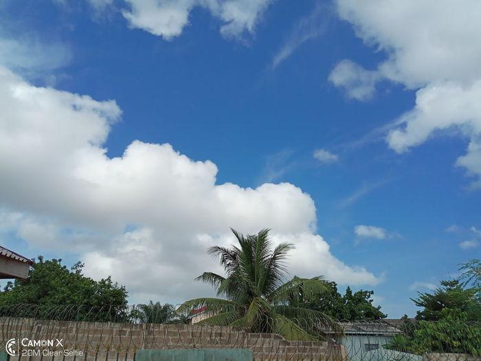 🙏 Sky-clouds #heavens Tree
