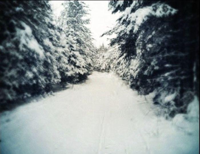 Winter at Hillman, MI Winter EyeEm Nature Lover Pure Michigan Black And White
