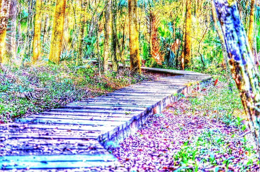 Another beautiful bridge at my fave place to hike!! Walking Around Hiking Enjoying The Sun Nature Footbridge Bridge