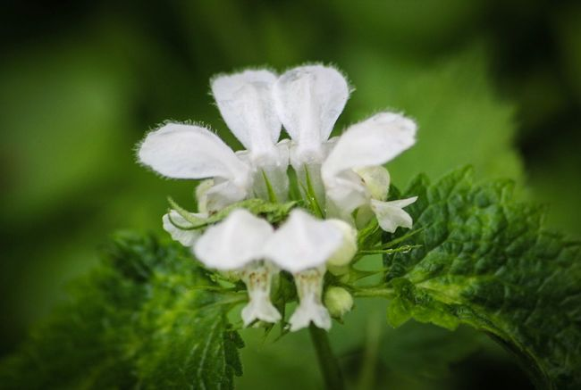 Flower Nature Growth White Color Fragility Plant Beauty In Nature Petal Close-up Flower Head Focus On Foreground No People Freshness Day Blooming Outdoors