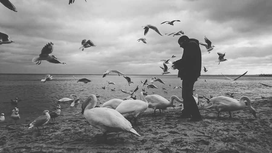 Side view of man standing by swans and seagulls on sandy beach
