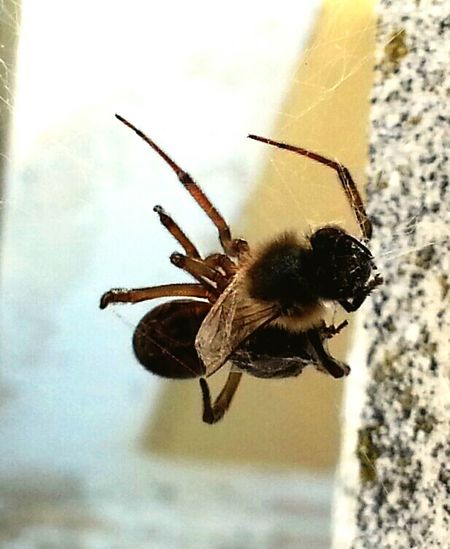 Hello World Check This Out Taking Photos Hanging Out Insect Photography National Geographic Spinne Und Biene Smartphone Photography Fotography Estepona Open Edit For Everyone Nature Photography