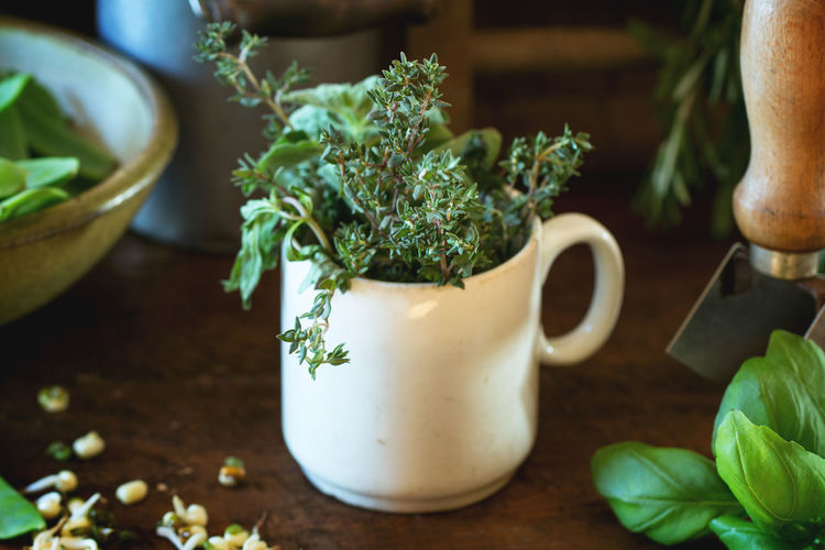 Close-Up Of Herbs In Coffee Cup On Table