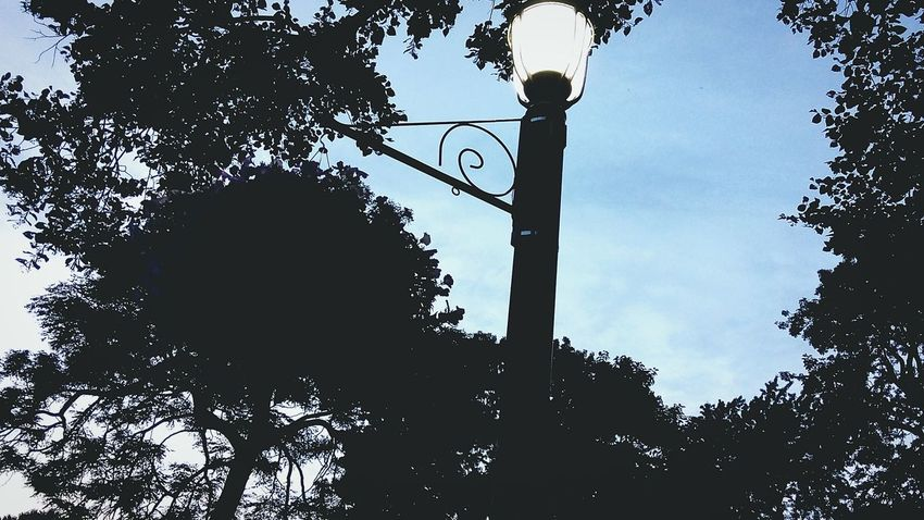 Street Light at Night in a Park