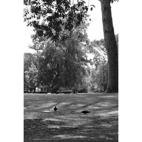 Ognuno porta con sé il segreto di cose perdute. --Rossella Porro Rossellaporro Segreto Coseperdute Perso Nocrop Biancoenero Monocromo Pic Picoftheday Instapic Instacool Instagood Cool Good L4l F4F Photo Ph Images Foto Canon Reflex 1200D Solocosebelle Meow uccellini
