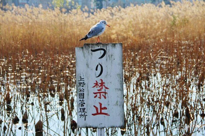 上野公園 上野 日本 Japan 釣り禁止 Text Communication Day Animal Themes Bird One Animal Outdoors No People Animals In The Wild Nature Animal Wildlife Focus On Foreground Perching
