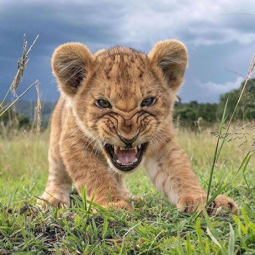 Portrait of cat on grass