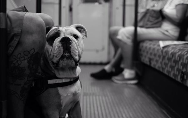 British Bulldog London Underground Travel Metro Bakerlooline No People Commuting Uk