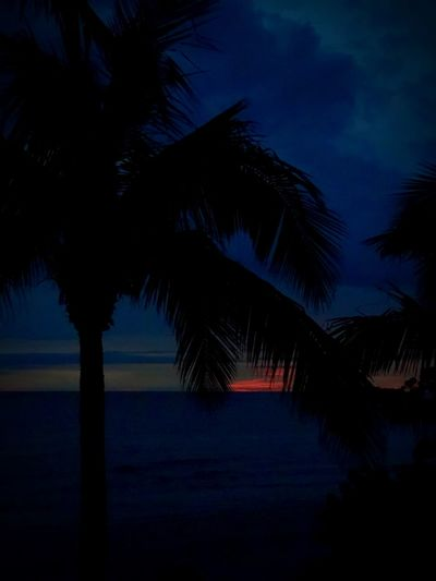 Tree Silhouette Sky Plant Palm Tree Beauty In Nature Tropical Climate