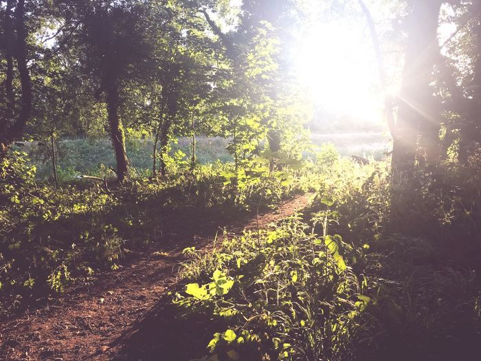 To The River Sunlight Tree Plant Nature Growth Day No People Tranquility Beauty In Nature Sunbeam Scenics - Nature