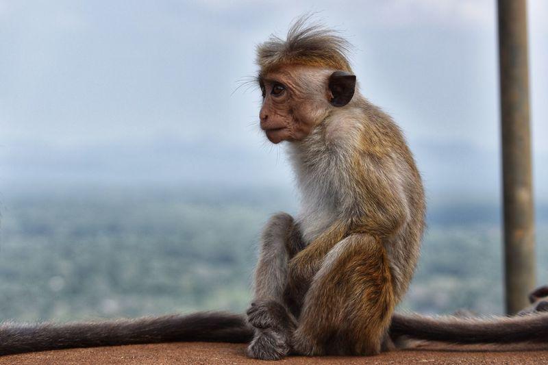 Lonely looking monkey Primate Animals In The Wild Focus On Foreground One Animal Animal Wildlife Vertebrate Mammal