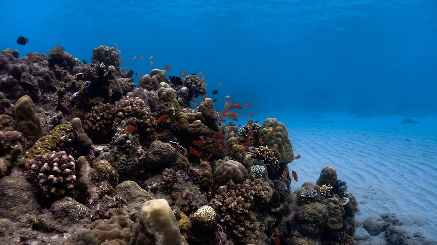 Corals amd sand at verde islands