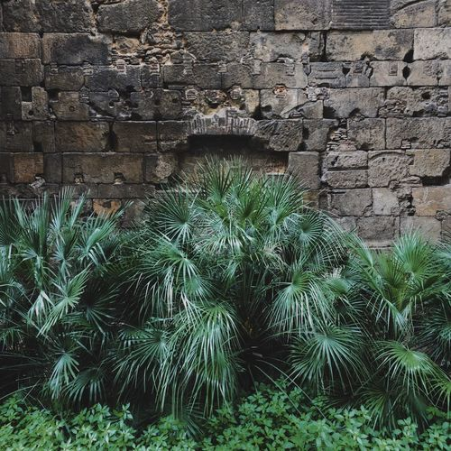 Plants growing on brick wall