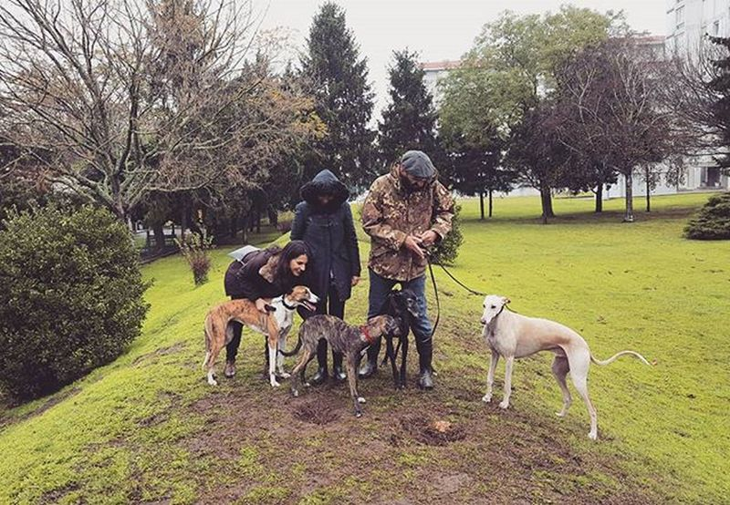 O gang das Antas. / Greyhound meeting 😍 Lana, Julia, Sócio & César. 🐕 Greyhounds Greyhoundsofinstagram Instagreyhounds Instagreyhound Dog Dogs Dogsofinstagram Parklife