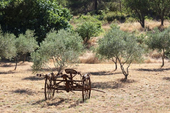 Tree Nature Tractors Tracteur Outdoors Olive Tree Olives
