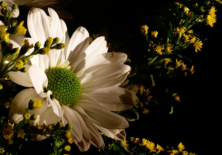 GM EE ... 😊💛😊 Floral Perfection Simplicity They All Yellow Macro Beauty Sunlight And Shadow Selective Focus EyeEm Flower AMPt - Vanishing Point Flowers Make Me Smile!😜