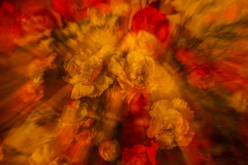 Flower Flowering Plant Beauty In Nature Plant Fragility Close-up Vulnerability  Yellow Multi Colored Freshness Backgrounds Orange Color No People Red Nature Petal Full Frame Flower Head Inflorescence Growth