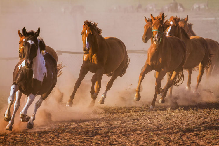 Animal Themes Day Domestic Animals Hoofed Mammal Horse Horse Photography  Horses Jockey Mammal Motion Nature Nature Photography Nature_collection On The Move Outdoors Physical Activity Riding Run Running Running Sky Speed Working Animal