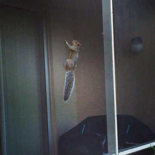 Squirrel Wildlife Nature Taking Pictures