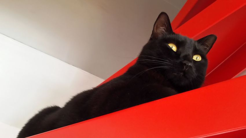 Cat Watching Cat Lovers Cat Photography Cats Eyes Black Cat Love Blackccat Eyes Black Cat Is Just So Beautiful. Black Cat Photography Catofeyem Catoftheday Cat Animal Eye My Cat