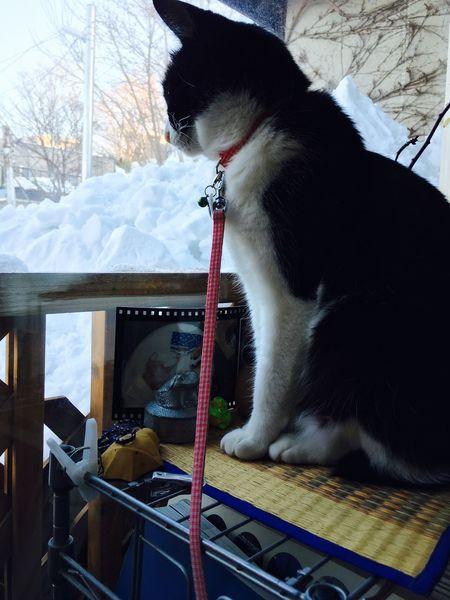ももさん Cat ♡