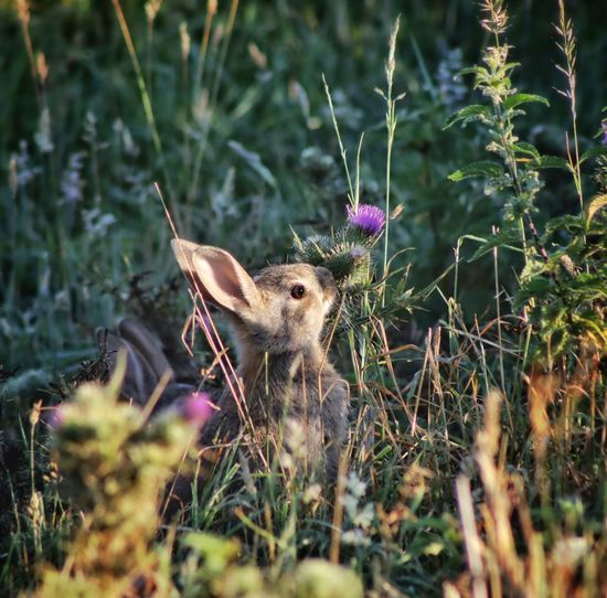 Rabbit on a field