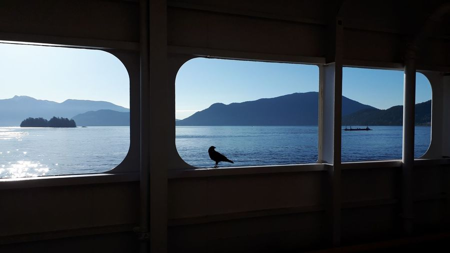Mountain Island WestCoast EyeEm Gallery Vacations Crow Silhouette Blue Water Travel Transportation Explore Feeding The Birds Streetphotography EyeEm Nature Lover View Window Ferry Water Sea Full Length Mountain Silhouette Sky Horizon Over Water Ocean Coast Tranquil Scene Scenics Boat Visual Creativity The Traveler - 2018 EyeEm Awards The Still Life Photographer - 2018 EyeEm Awards My Best Photo